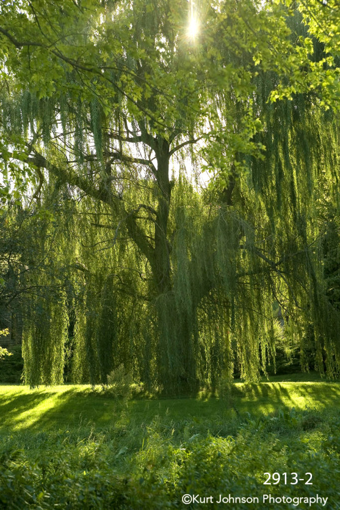green light landscape tree willow