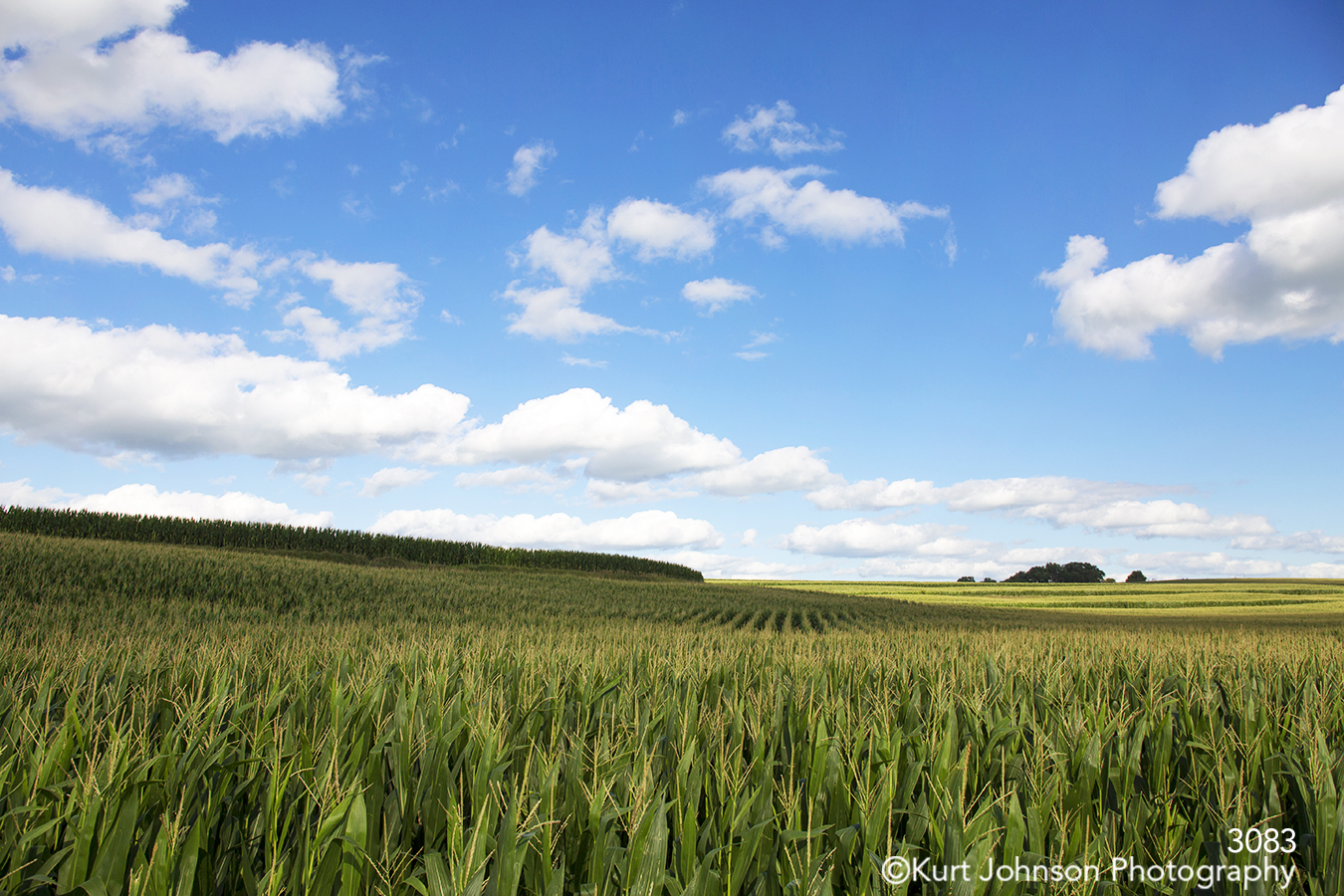 landscape crops corn clouds rural fields