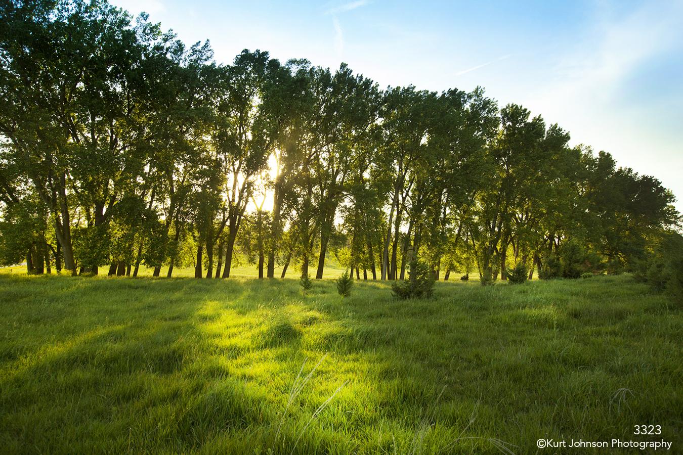 landscape trees sunset green grasses