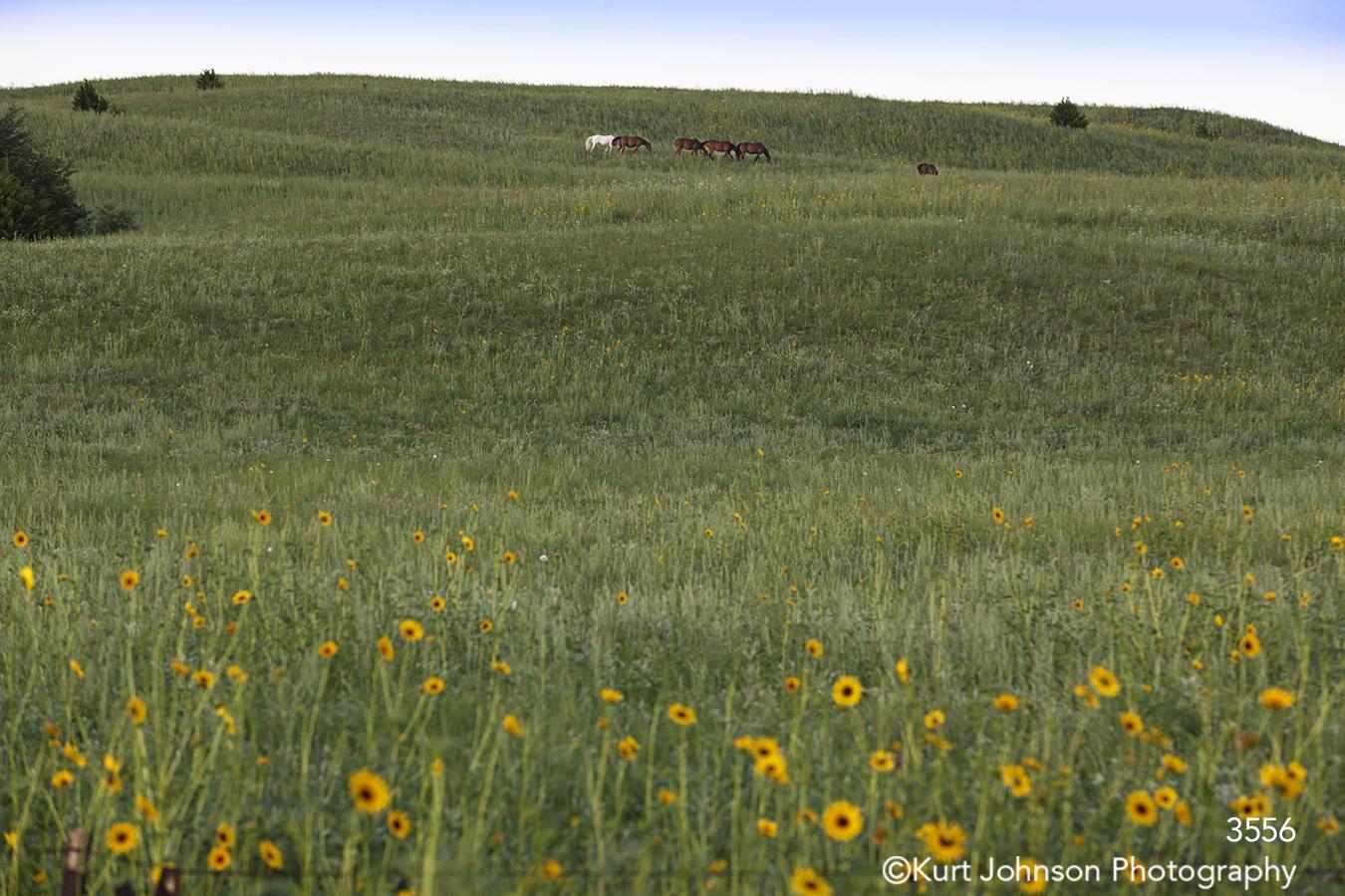 landscape field grasses flower green wildlife horses