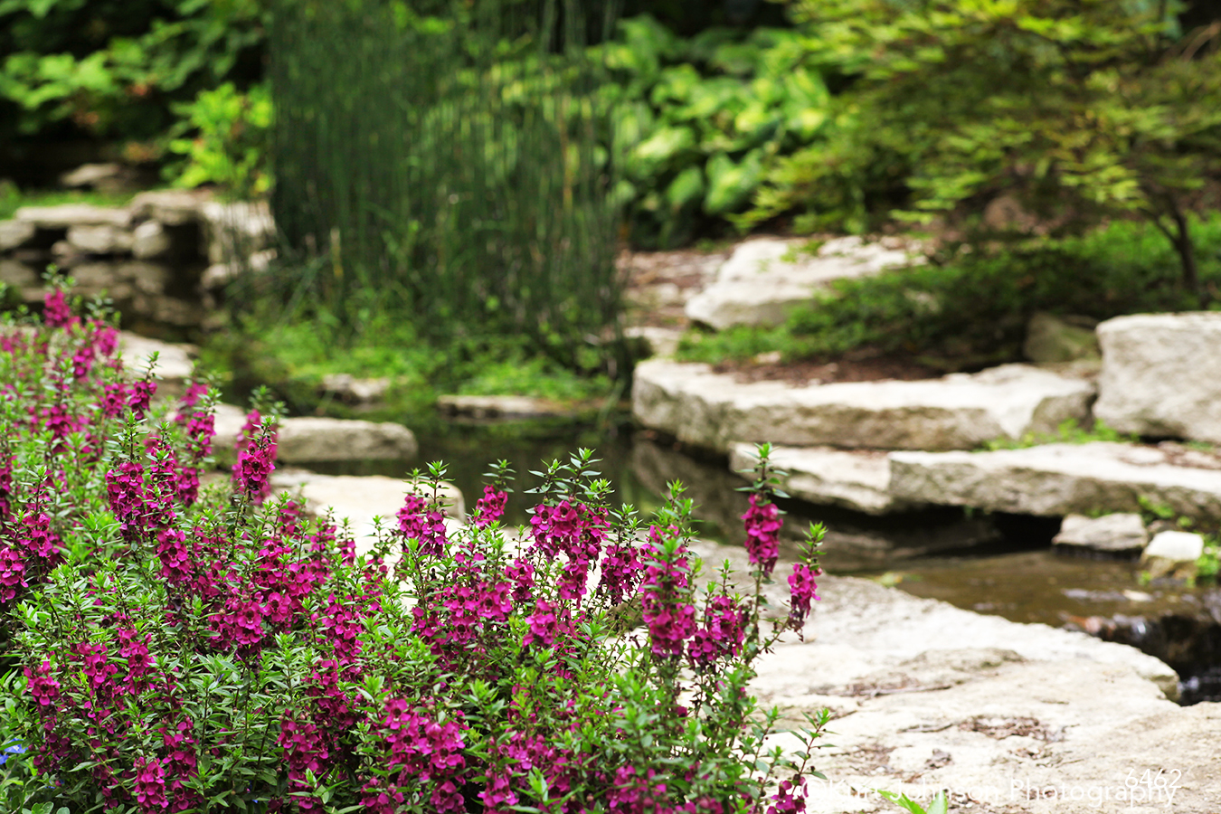 landscape waterscape stream flowers purple rocks green grasses garden