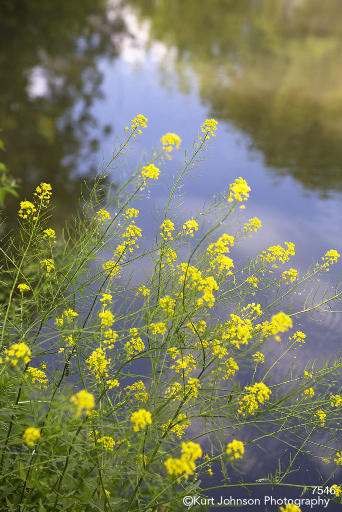 Flowers water waterscape yellow
