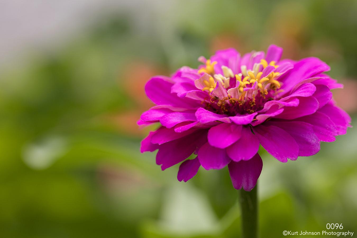 flower pink petals green