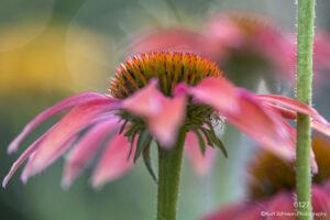 flower pink green stem
