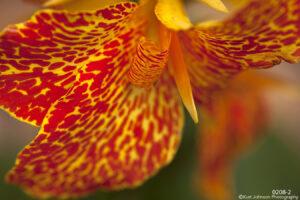 flower orange spots yellow close up texture