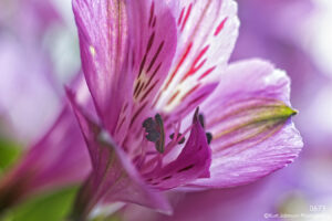 flower purple pink close up detail