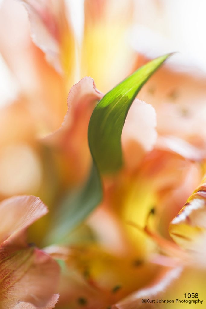 flower orange texture close up abstract yellow green leaf