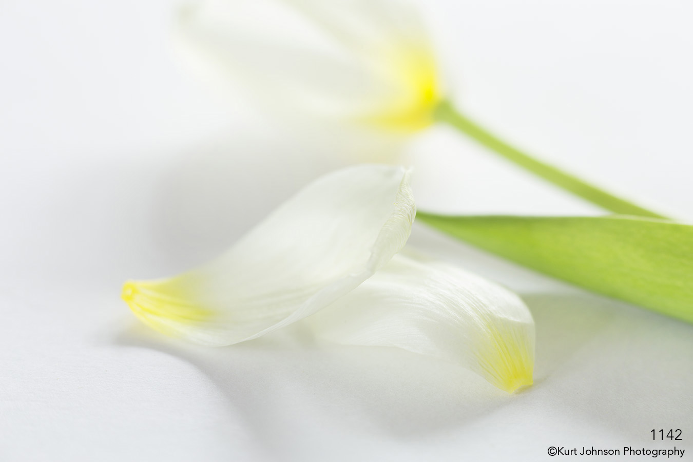 flower white petals green leaves abstract