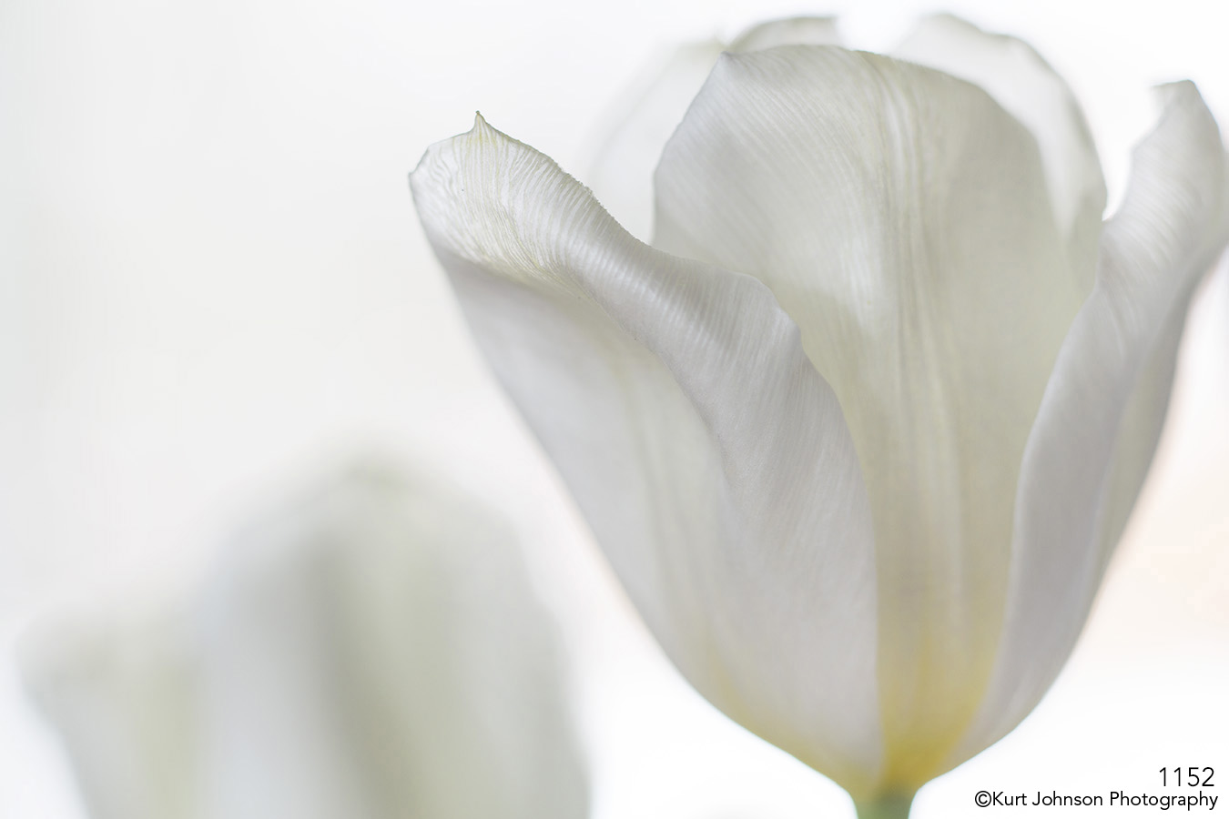 flower white petals abstract