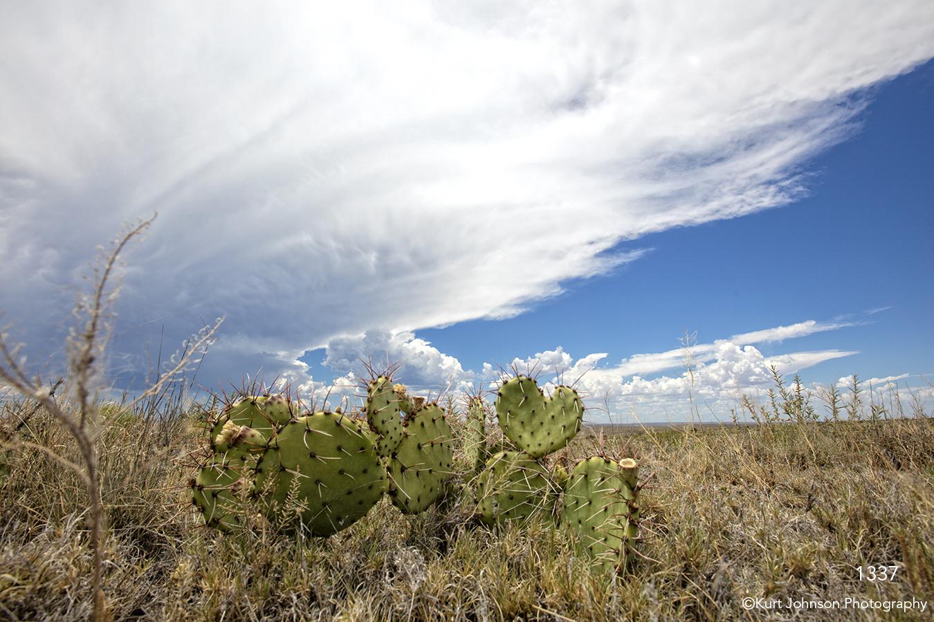 southwest landscape clouds big sky desert cactus green