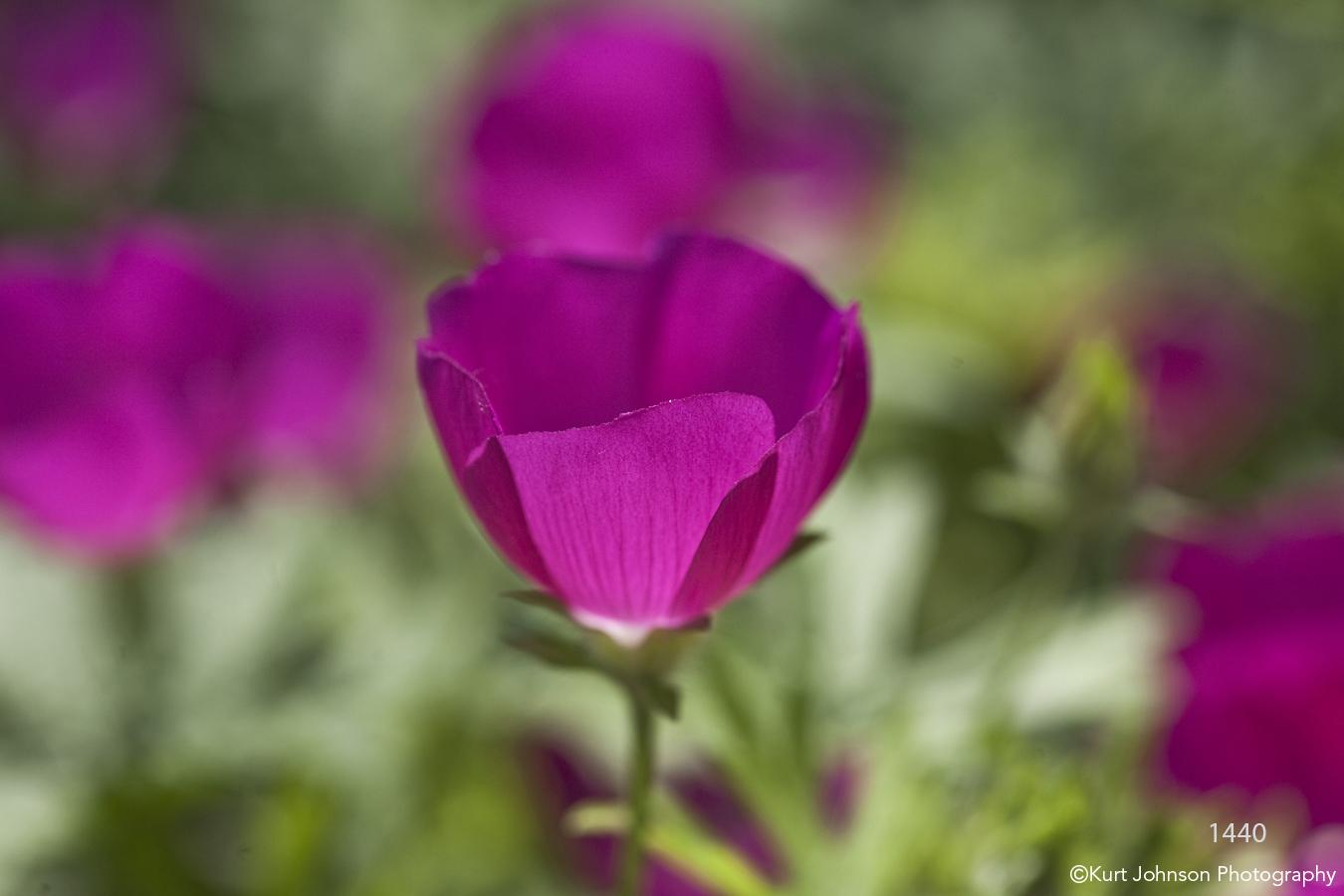 flower purple green blooming