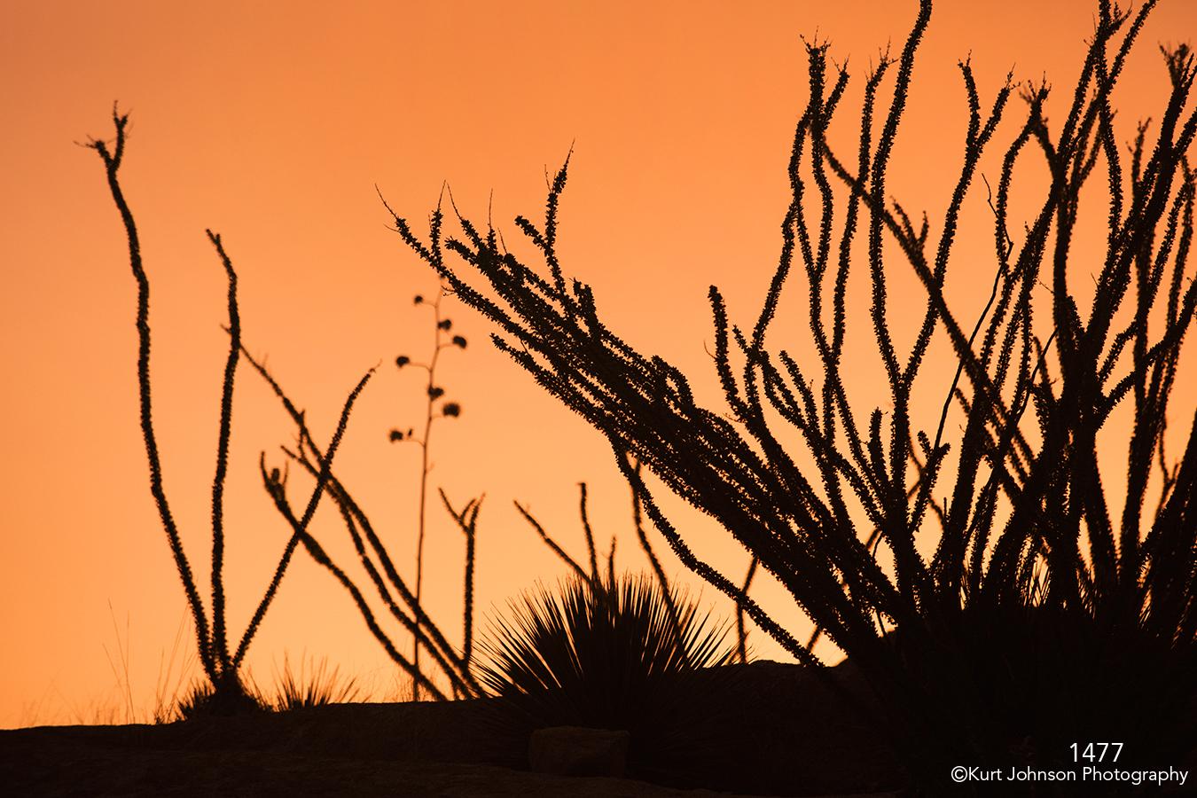 southwest sunrise sunset grasses orange yellow