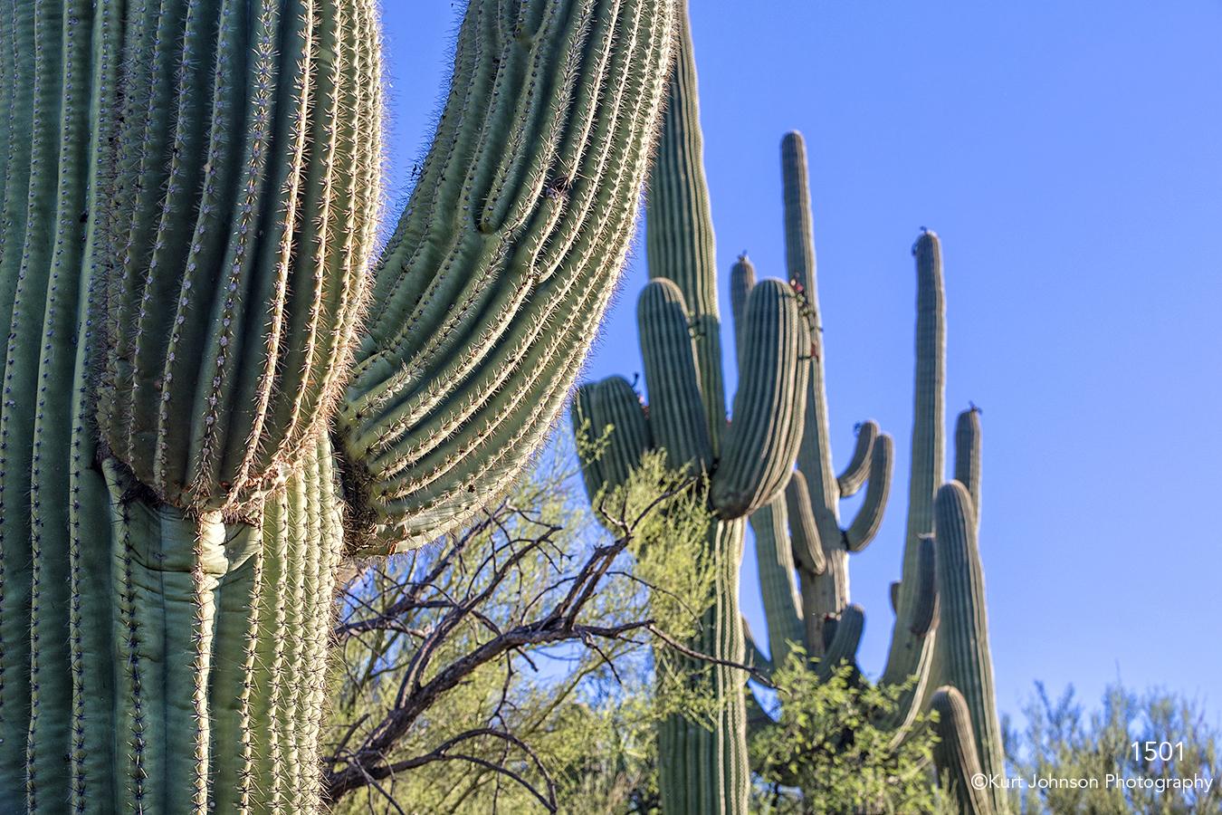 southwest cactus green landscape