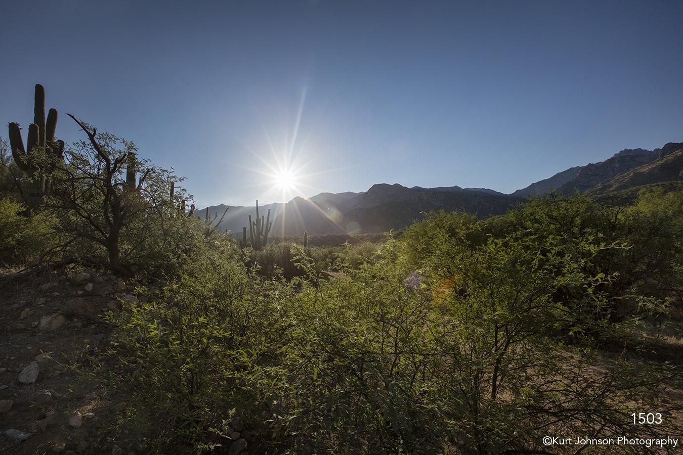 southwest landscape sunrise green grasses desert