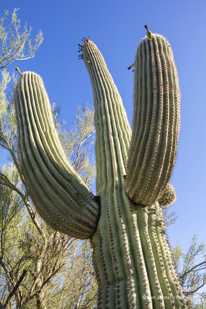 southwest sunrise green grasses desert cactus