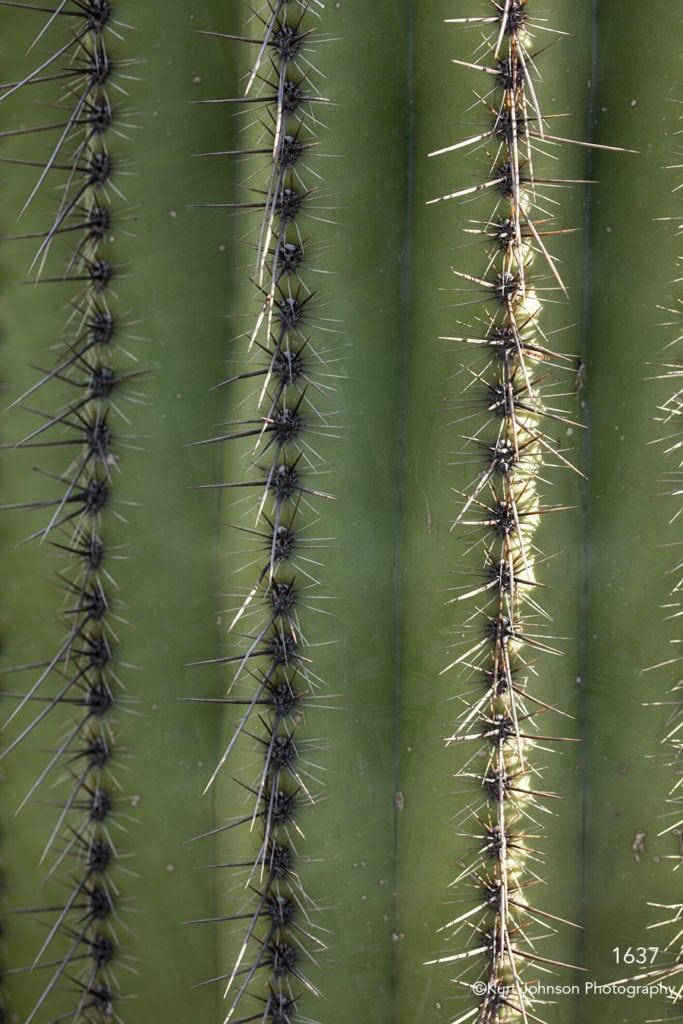 southwest green grasses desert cactus