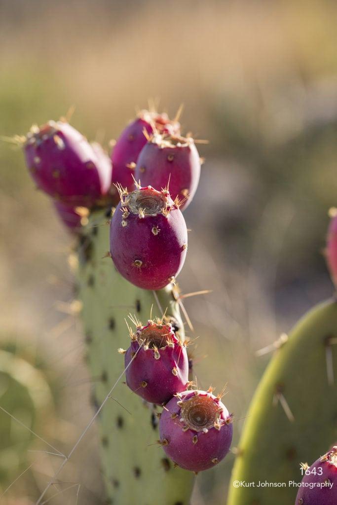 southwest green grasses desert cactus red