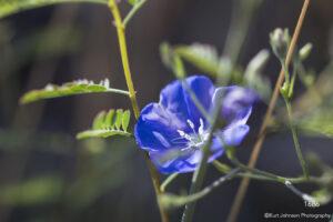 southwest grasses flower blue green desert