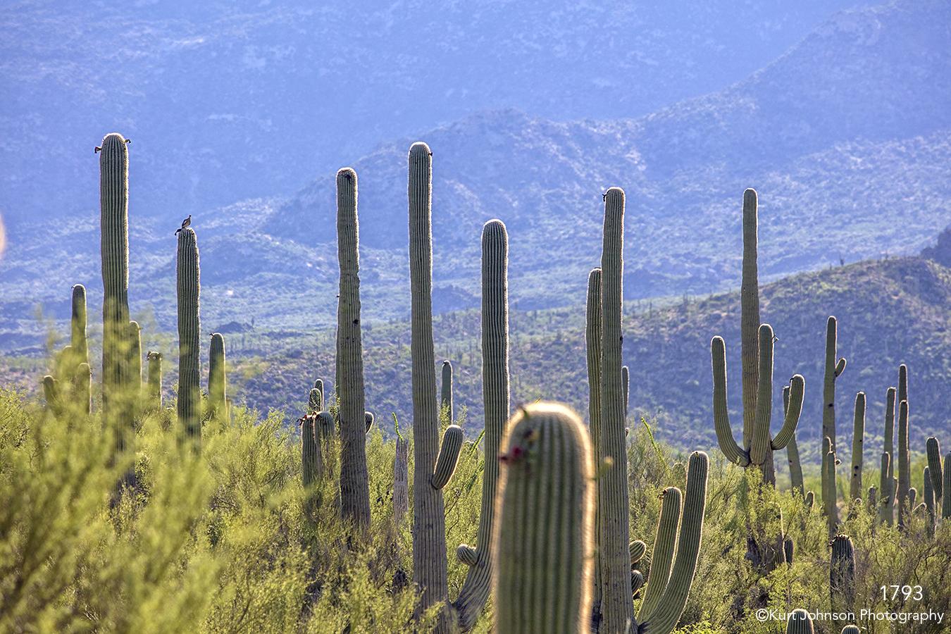 southwest landscape green grasses desert cactus mountains