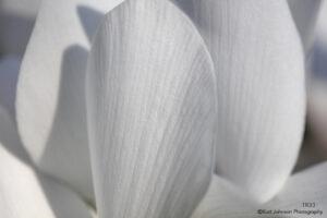 flower white texture petals