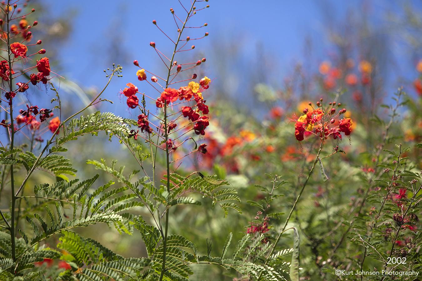 southwest orange flower flowers desert