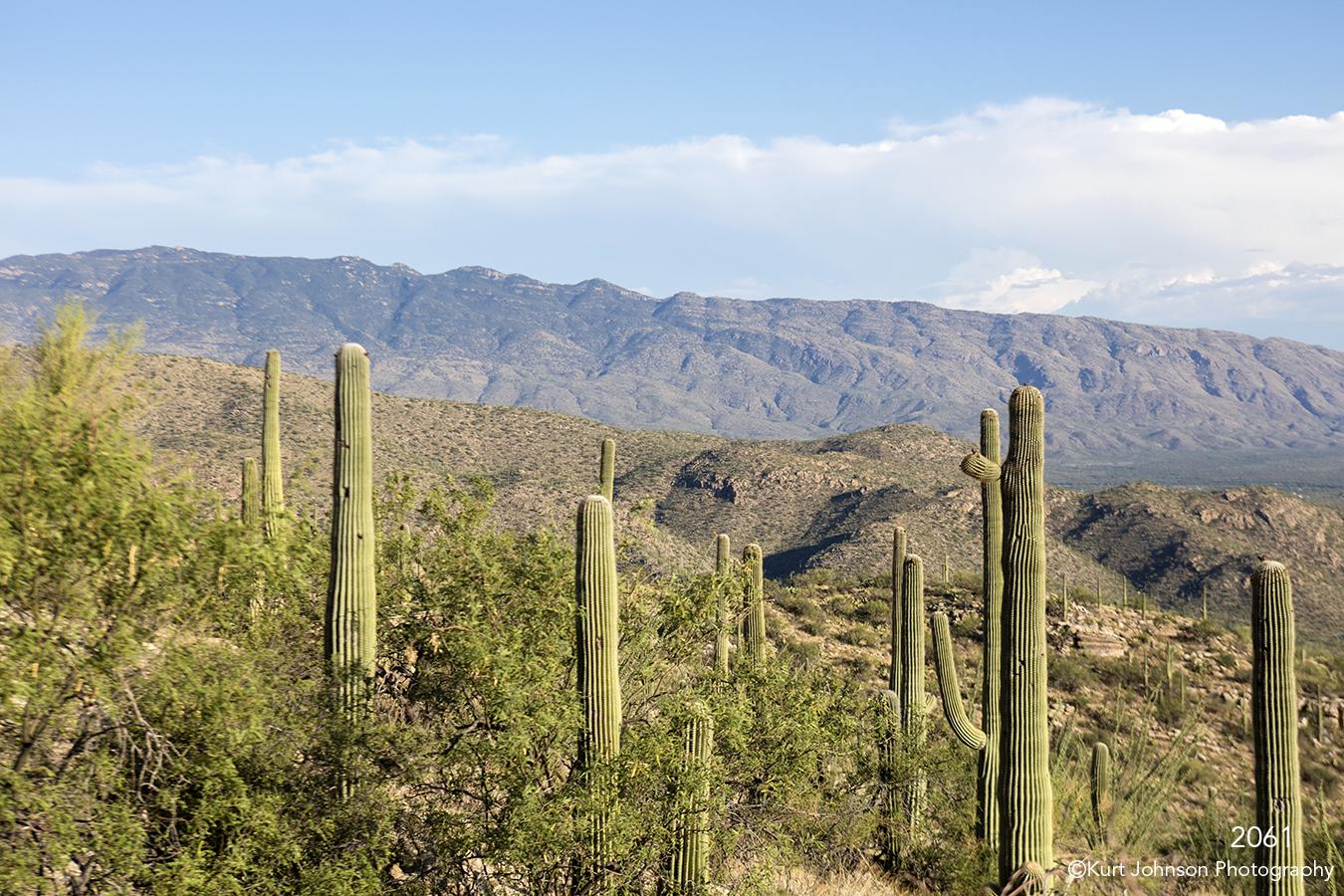 southwest landscape desert cactus green mountains