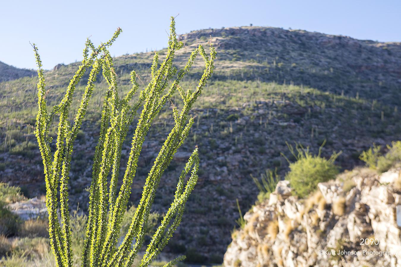 southwest landscape desert grasses green