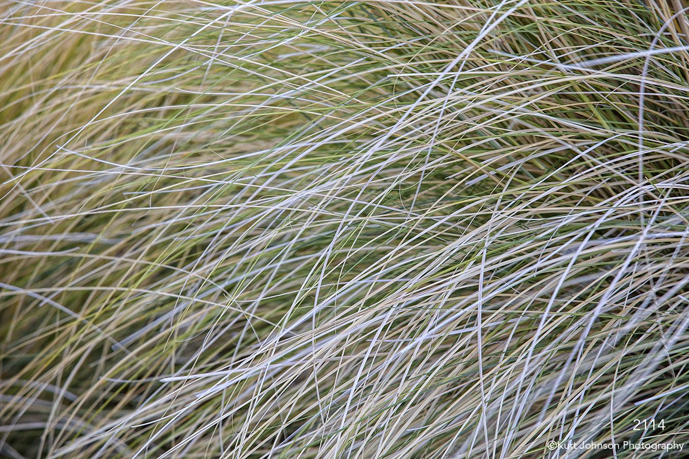 southwest green grasses desert