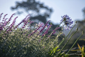 flower flowers grasses purple green