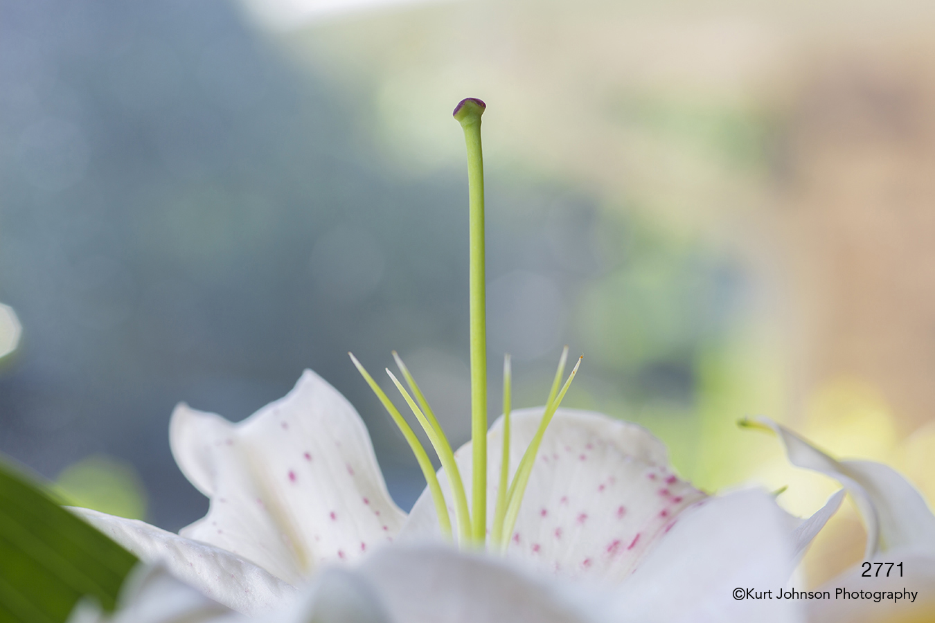 flower white green lily abstract