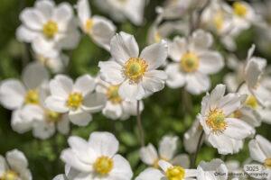 flower flowers white yellow