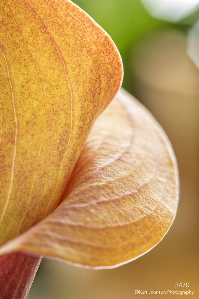flower orange petal close up detail abstract