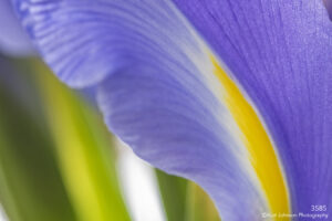 flower iris purple texture abstract