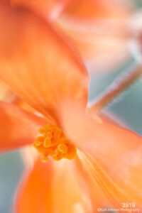 flower orange close up abstract