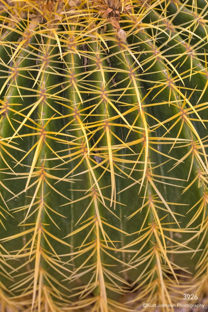 southwest cactus green texture yellow