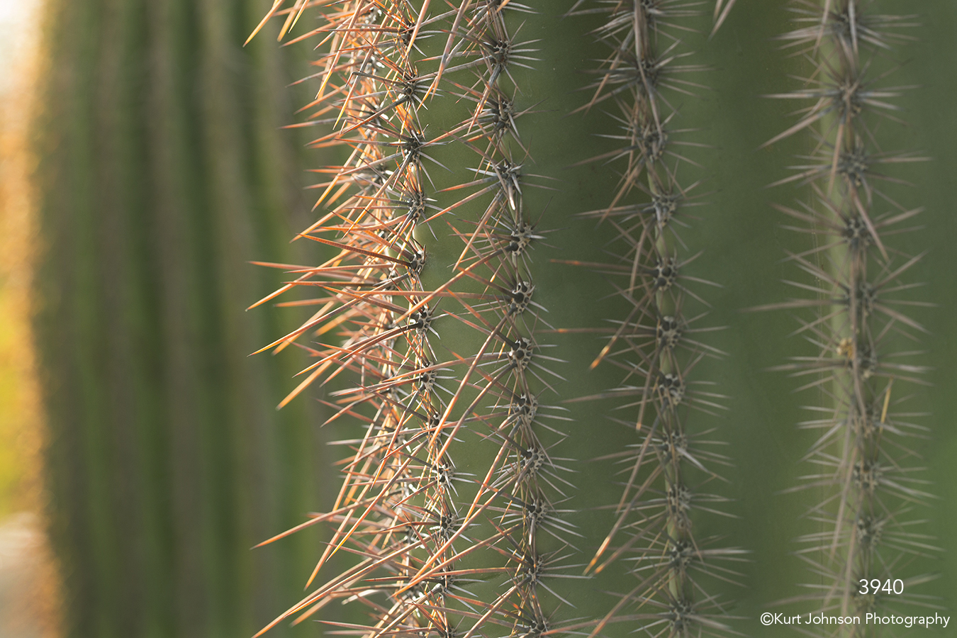 southwest cactus green texture