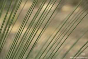 southwest grasses leaves green texture