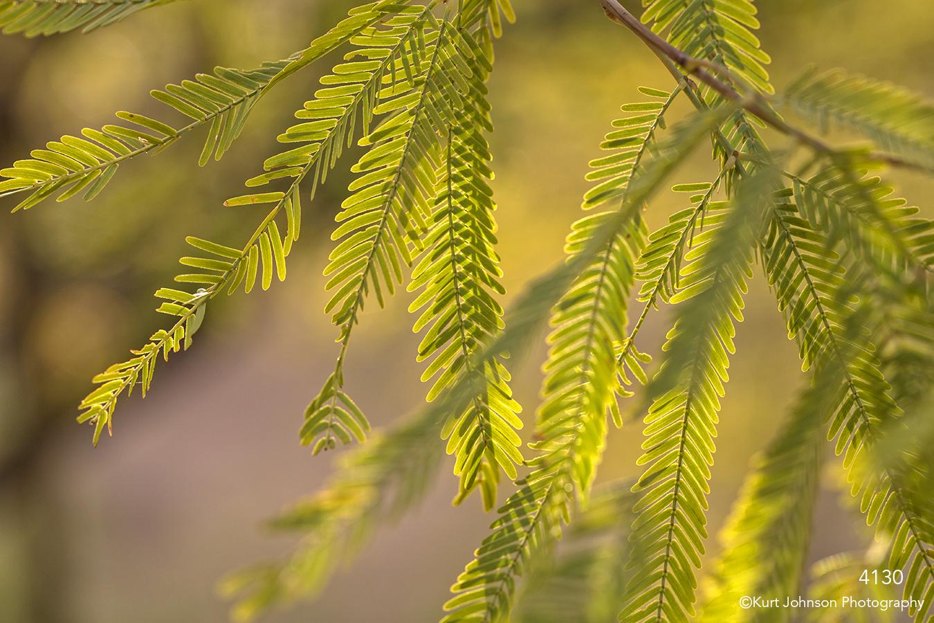 southwest green leaves trees