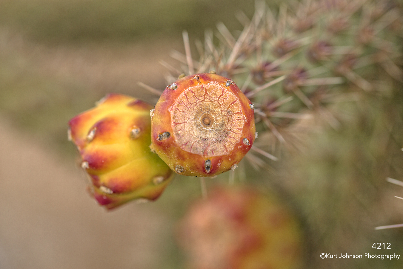 southwest green red cactus texture