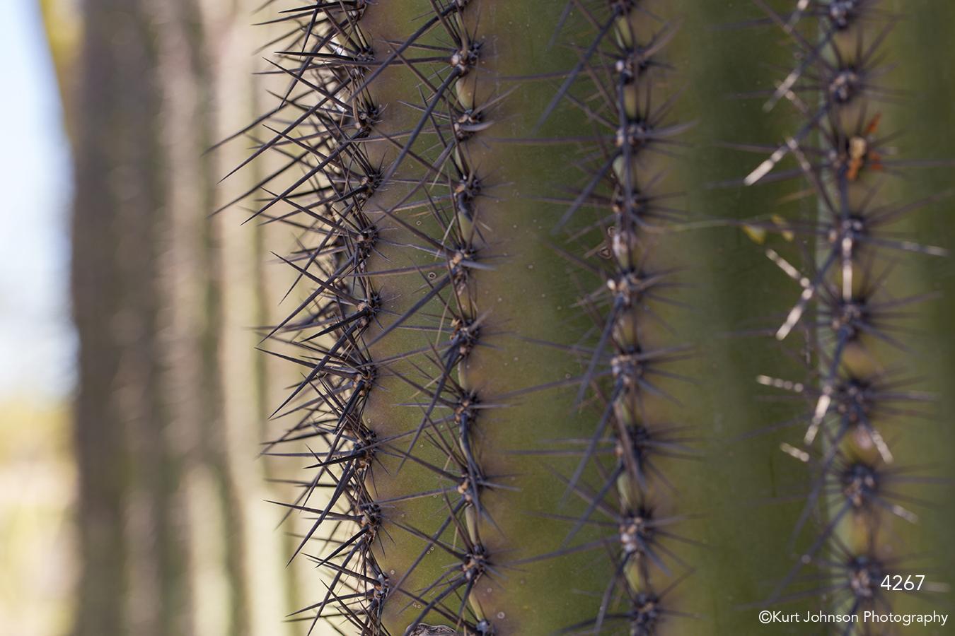 southwest texture cactus green