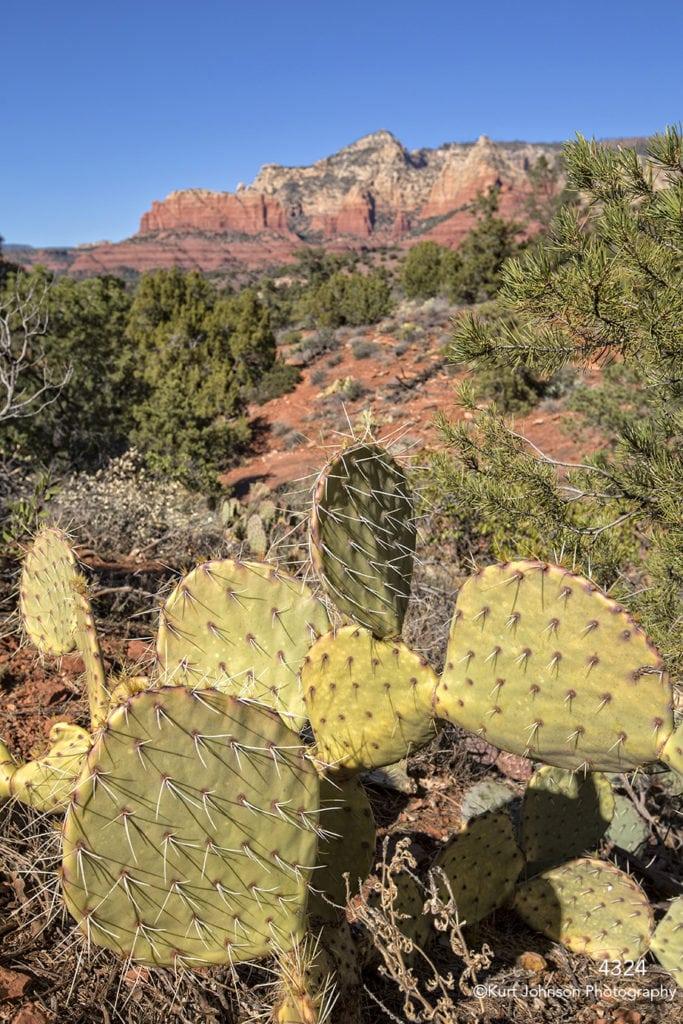 southwest rocks texture green grasses landscape desert