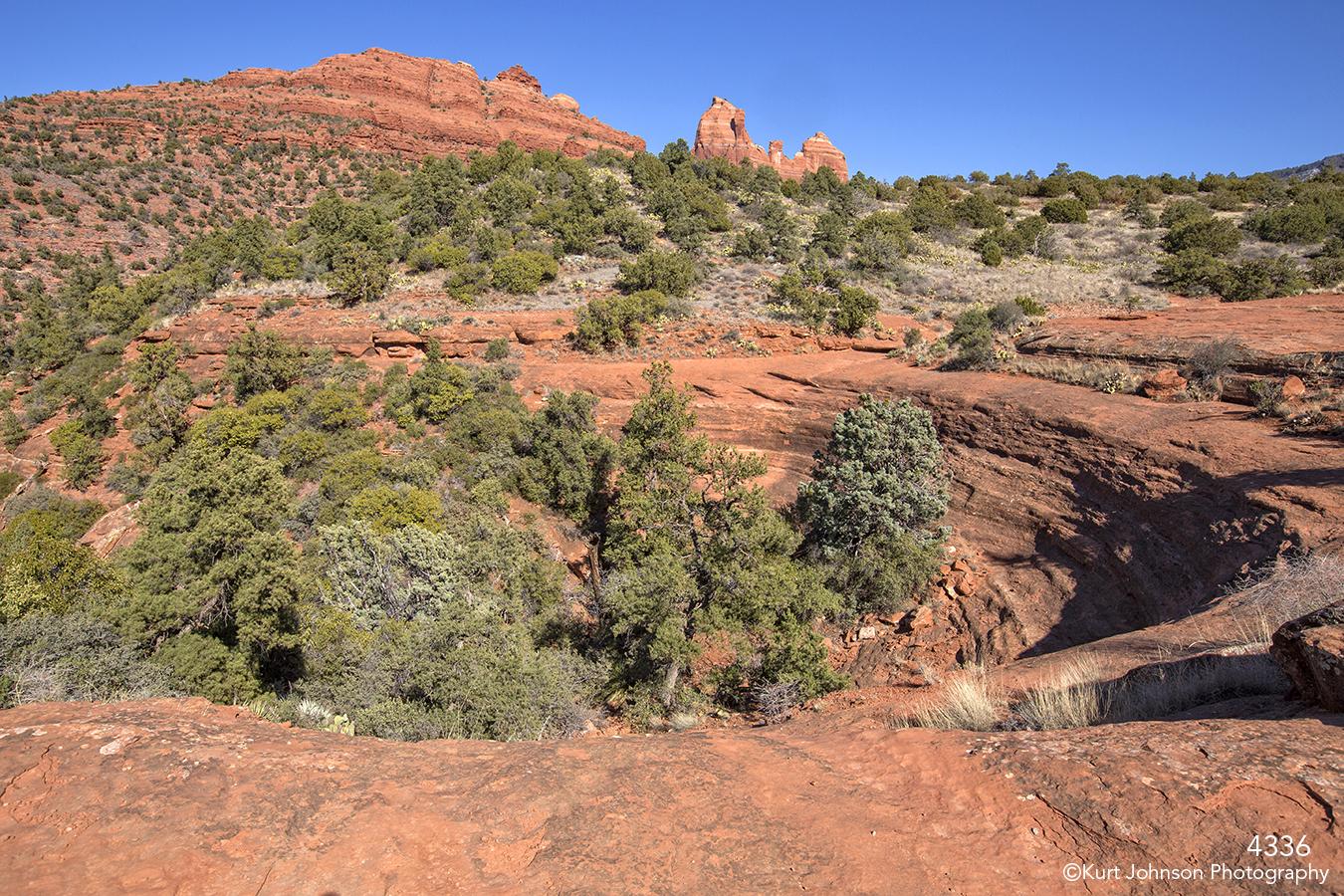 southwest desert landscape trees green