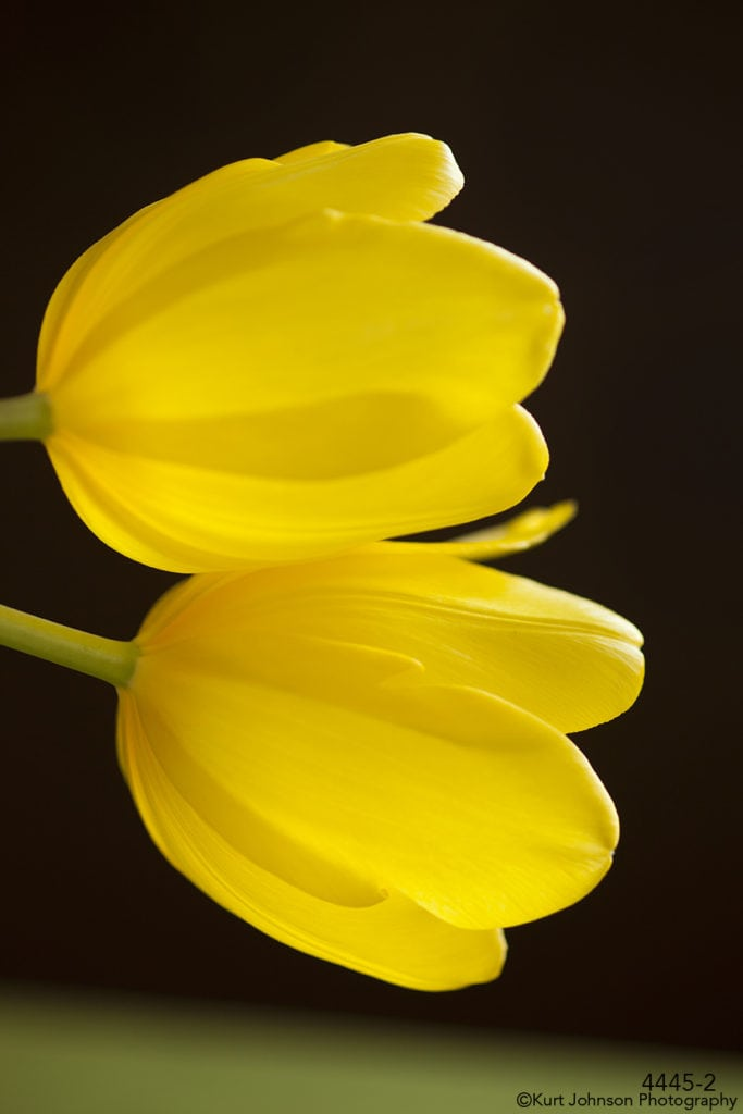 flower yellow tulip flowers