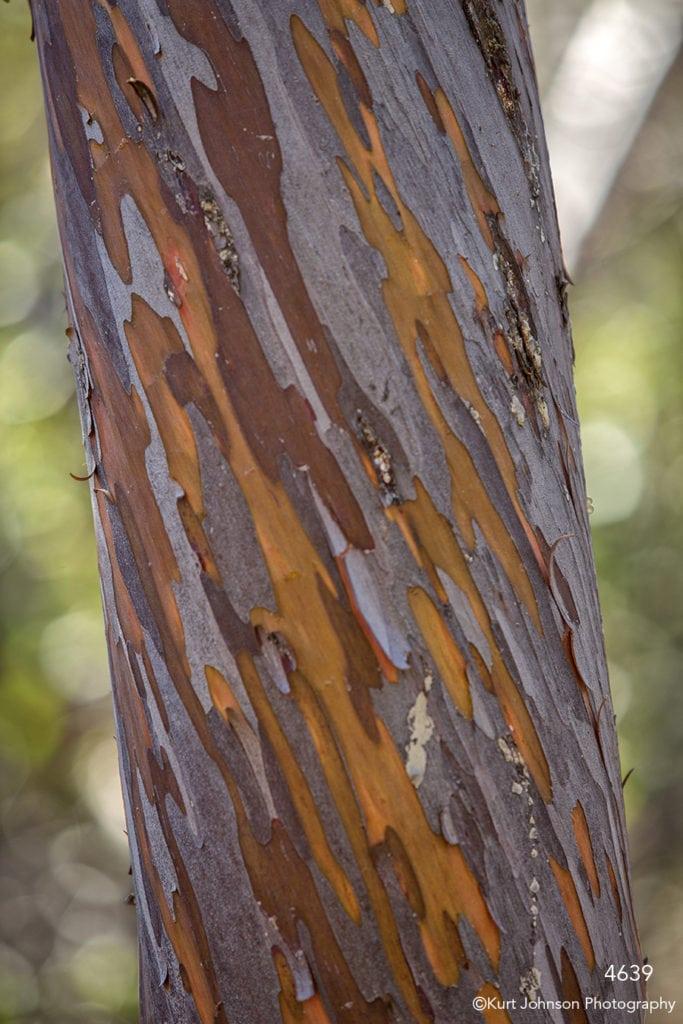 southwest tree bark texture orange