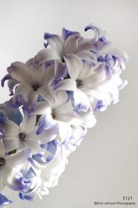 flower white purple