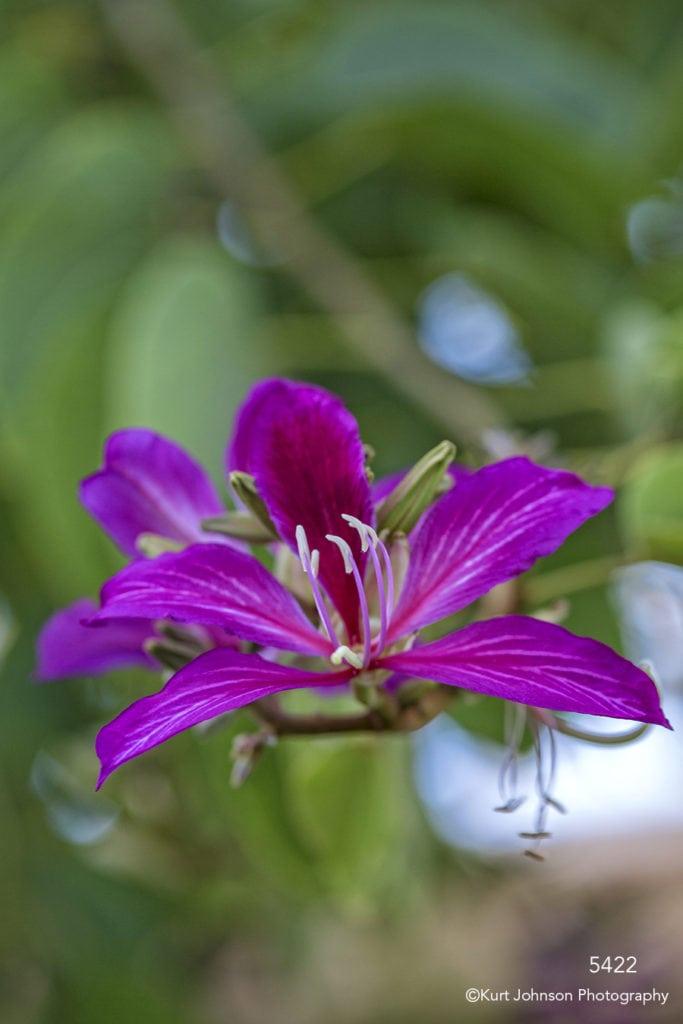 flower pink blooming green leaves flowering tree