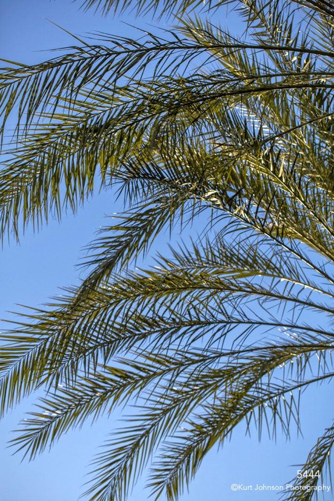 southwest leaves tree green tree