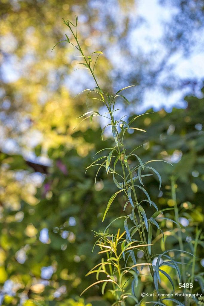 southwest green grasses leaves