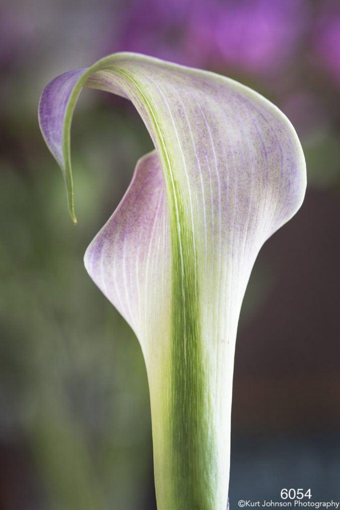 flower purple green lines texture