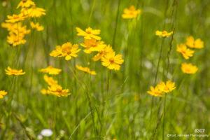flower yellow flowers green grasses